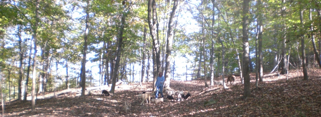 Off hiking in the Woods again with all my Doggies!