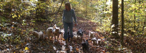 Me & Our Designer Dog Mamas & Papas Out For A Walk!