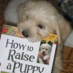 "I have a real good book ""How to Raise A Puppy You Can Live With"" that I give all my new puppy owners. This little pup highly recommends it!"