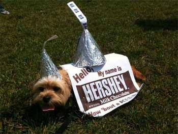 HersheyChocolate