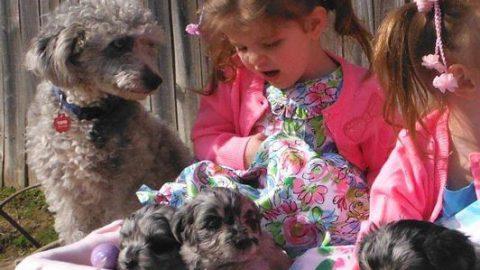 Easter Fun with PolkaDot's Pups!