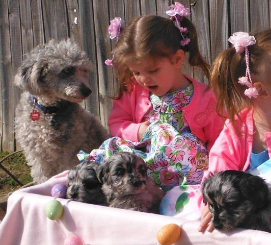 Easter Fun with PolkaDot's Pups!