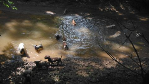 Dogs & I headed down to the Creek for a COOL swim!!