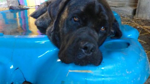 LolliPop hoggin the little doggie's pool…