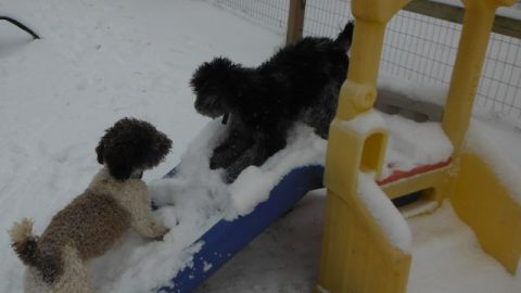 FUN Snow Dogs !!!