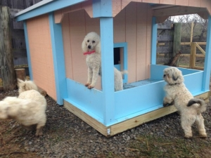 New DogHouse & ANOTHER PlayYard