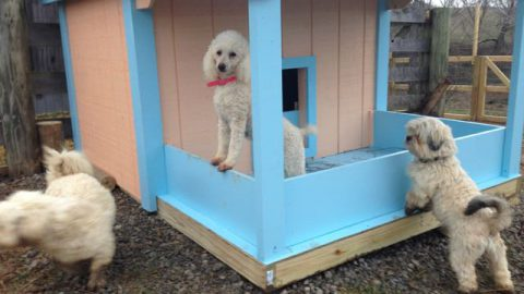 Just Finished Building a Pretty New DogHouse & ANOTHER PlayYard!!!