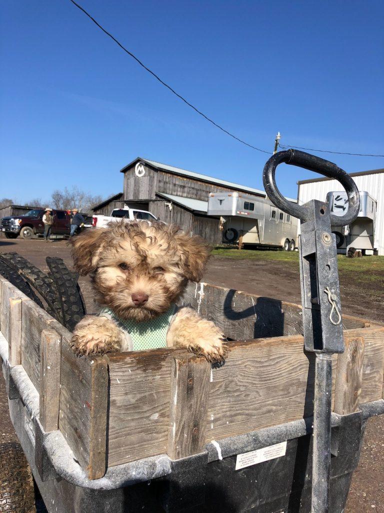 Sunshine puppy