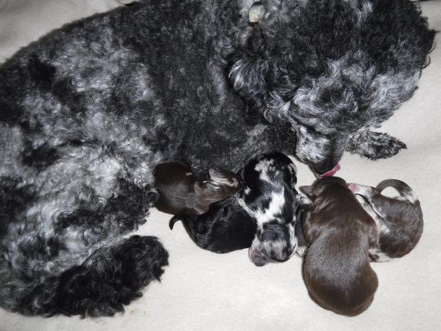 Cheerio & her 5 babies!