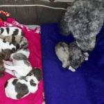 Echo & her 8 babies!