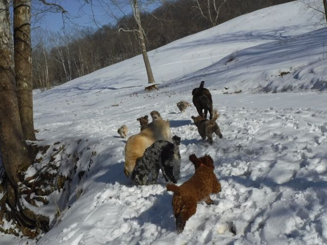 Winter Hiking with the Dogs