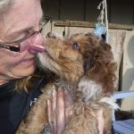 Havanese Poodle Mix HavaPoo Breeder Puppies for Sale