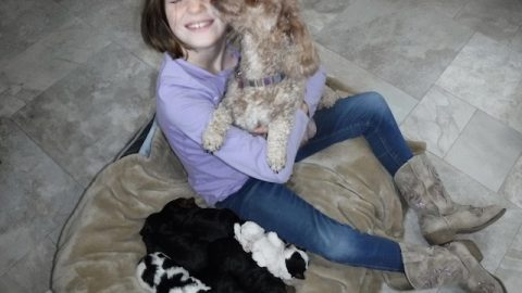 Available HavaPoo & YorkiPoo Puppies!!!