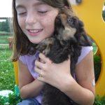 Sunny Day Puppies Puppy Breeder Kennel